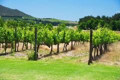 South Africa vineyard valley landscape Royalty Free Stock Images