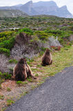 South Africa, Western Cape, Cape Peninsula, Cape of Good Hope royalty free stock image