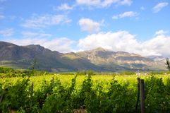 South Africa winelands Royalty Free Stock Photos