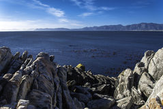 South African Bay with Humpback Whales. Bay at Hermanus in South Africa with two whales Stock Image