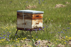 South African bee hive Stock Image