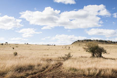 South african bush land Royalty Free Stock Images