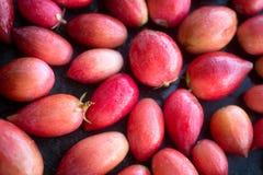 South African carissa carandas fruits Royalty Free Stock Images