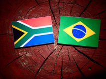 South African flag with Brazilian flag on a tree stump isolated. South African flag with Brazilian flag on a tree stump stock photo