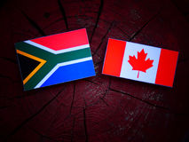 South African flag with Canadian flag on a tree stump isolated. South African flag with Canadian flag on a tree stump royalty free stock photography