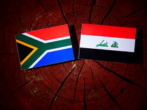 South African flag with Iraqi flag on a tree stump isolated. South African flag with Iraqi flag on a tree stump royalty free stock images