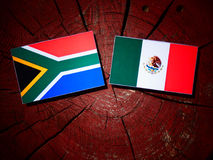 South African flag with Mexican flag on a tree stump isolated. South African flag with Mexican flag on a tree stump royalty free stock photography