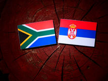 South African flag with Serbian flag on a tree stump royalty free stock image