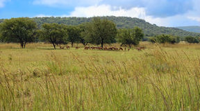 South african landscape Royalty Free Stock Photo