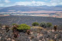South African Landscape with Mountains, Bushes and Plains Stock Photos