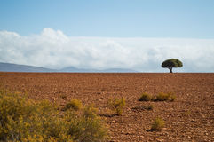 South African Landscape with One Lonely Tree, Bushes and Plains Stock Photography