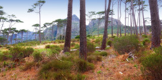 South African nature Stock Photography