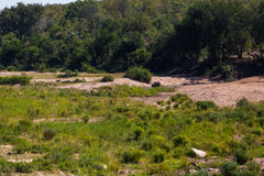 South African riverbed Royalty Free Stock Image