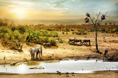 South African Safari Wildlife Fantasy Scene. Dreamy scene of common South African safari wildlife animals together at sunset Royalty Free Stock Image