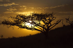 South African. Sun Set Royalty Free Stock Photos