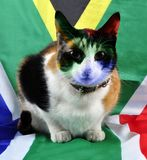 A South African supporter of the feline kind. stock images