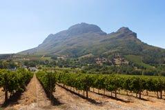 South African vineyards. South Africa, vineyards near Stellenbosch Stock Photos