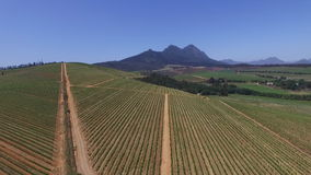 South african vineyards stock footage