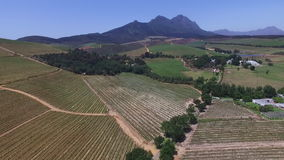South african vineyards stock video