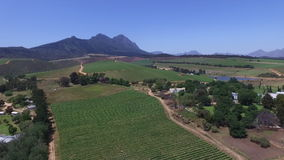 South african vineyards. (Western Cape stock video