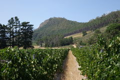 South African wine farms Royalty Free Stock Image