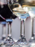 South African wines Royalty Free Stock Photo