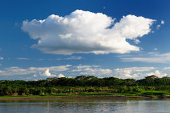 South America,  Amazon river landscape in Brazil Royalty Free Stock Photos
