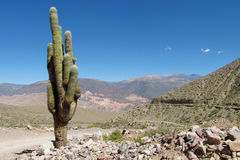 South America huge cactus in the wild mountains Stock Photo