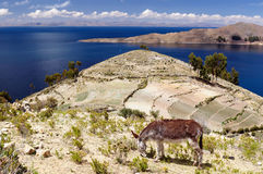 South America, Titicaca lake landscape Royalty Free Stock Photography