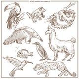 South American animals and birds vector sketch vector illustration