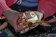 South american farmer offers colored corn. Countryman gives some coloured corn to taste royalty free stock image
