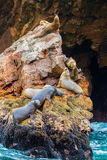 South American Sea lions relaxing on rocks of Ballestas Islands in Paracas National park,Peru Stock Photo
