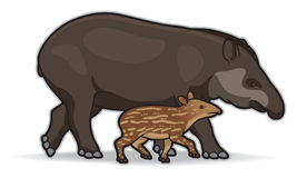 South American Tapirs. Illustration of a mother and infant tapir Stock Photography