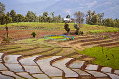South Asian rice field terraces. Stock Images
