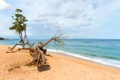 Tropical beach with yellow sand, azure ocean and green trees. South Asian tropical beach with yellow sand, azure ocean with foamy waves, green trees and colorful Royalty Free Stock Image