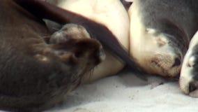 South Australia, kangaroo island, Seal Bay Conservation Park stock video footage