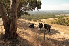 South Australian Field Royalty Free Stock Image