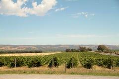 South Australian Vin Yard Royalty Free Stock Photography