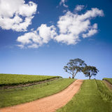 South Australian Vineyard Royalty Free Stock Image