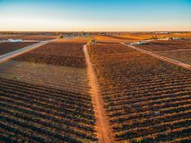 South Australian vineyards in winter at sunset. royalty free stock images