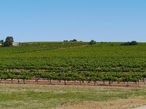 The South Australian wine vineyards Stock Photo