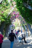 South Bank Grand Arbour running the length of South Bank parklands. Stock Photography