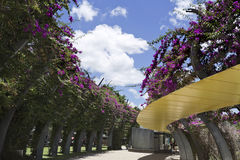 South Bank Pedestrian Walkway. The Arbour consists of 443 curling steel columns covered in bouganvilleas which flower throughout the year Royalty Free Stock Image