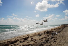 South Beach. Birds in the afternoon in south beach, miami Royalty Free Stock Photo