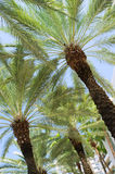 South Beach Palm Trees Royalty Free Stock Photos