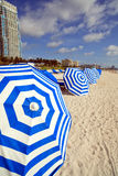 South Beach Umbrellas and Lounge Chairs. Rows of lounge chairs and umbrellas in South Beach, Miami with condos in the background royalty free stock image