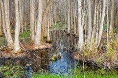 South Carolina bald cypress swamp stock image