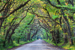 South Carolina Botany Bay Road Tree Tunnel Royalty Free Stock Images