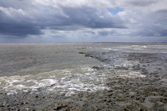 South Carolina Coastal Mud Flats Royalty Free Stock Image