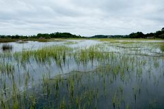 South carolina low country marsh flooded during gray cloudy day. View of salted water marsh in south carolina`s chaleston countryside royalty free stock photography